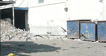 Cal Waste Solutions