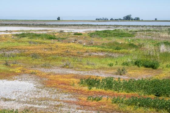 Hamilton Novato Wetlands