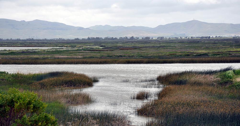 Suisun Marsh