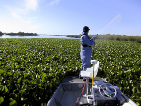 Aquatic pesticide spraying by CA Dept of Boating and Waterways