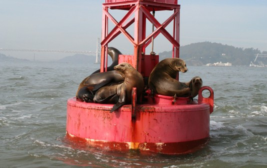 Seals on a buoy