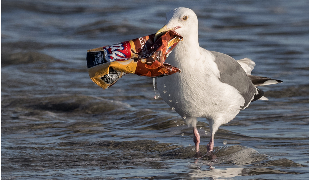 Bird with Trash