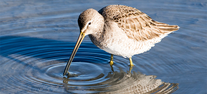 Baylands Bird by Robb Most