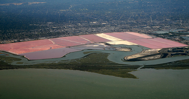 The South Bay salt ponds and Bay shore